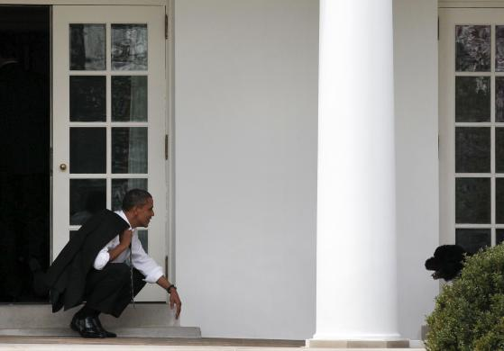 U.S. President Obama bends down to wait for his dog, Bo, to come towards him outside the Oval Office of the White House in Washington